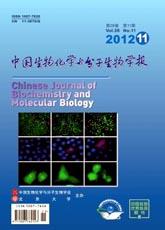 锐意医学网-中国生物化学与分子生物学报